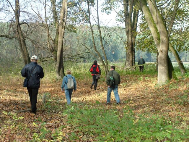Októberi túraajánlatok a Gemenci erdőben