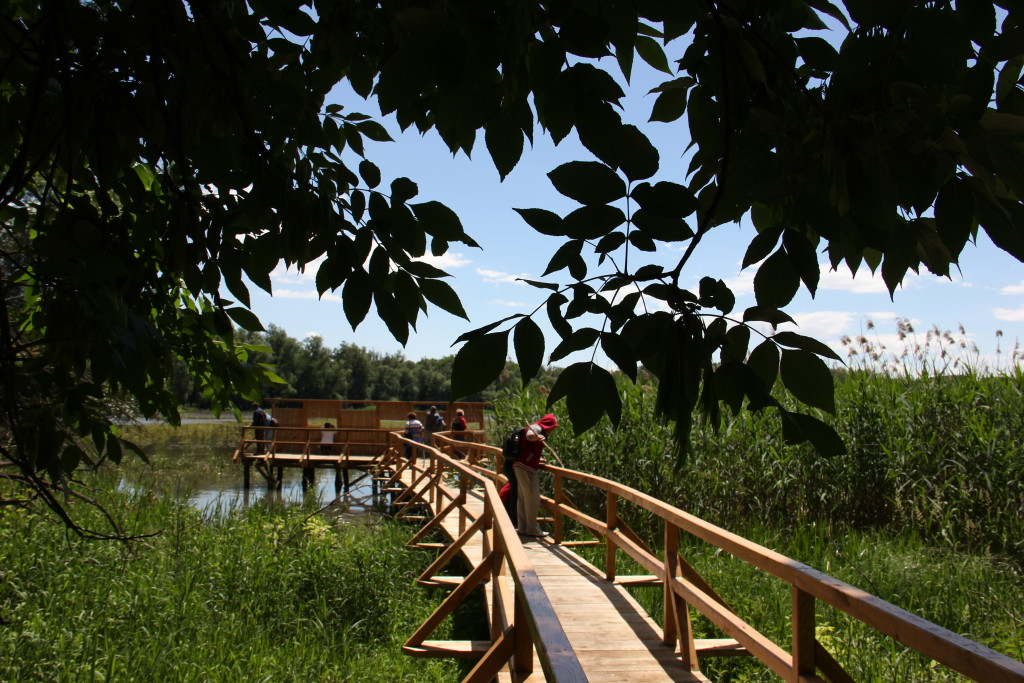 Pallóösvény a Forgó-tóhoz
