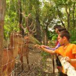 Barátkozás a vadmegfigyelőben élő szarvasokkal.