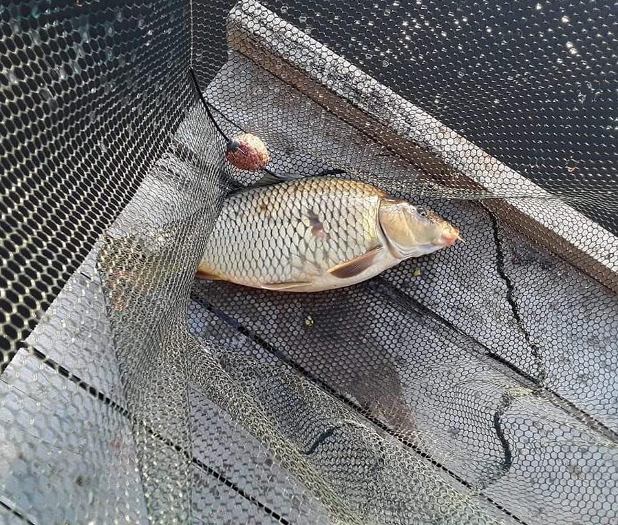 Horgászélmény a Béda holtágon